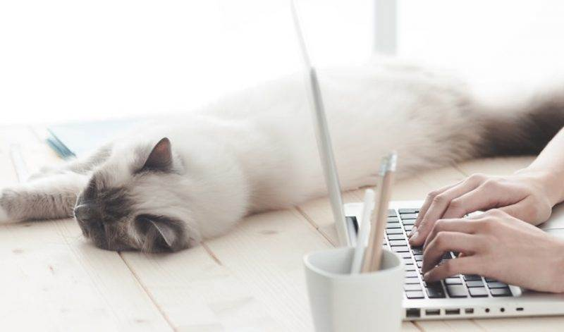 6 Facebook Marketing Strategies That Will Help Your Pet Business