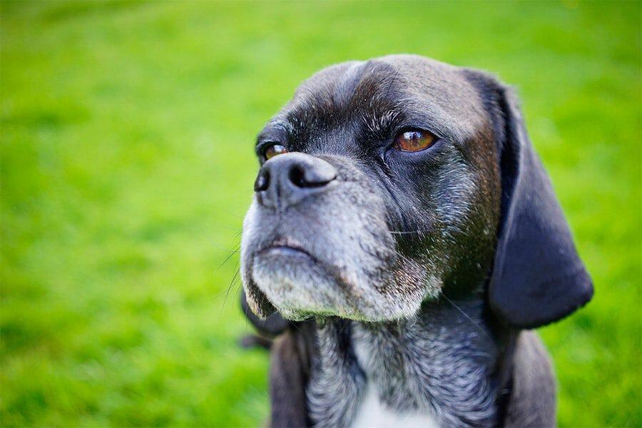 3 Ways Social Media Can Help Grow Your Pet Business
