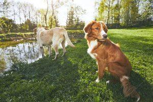 Free Pet Business Training - Jump Into Barketing
