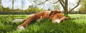 Pet Sitter and Dog Walker Website - Services and Pricing