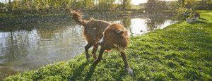 Pet Sitter and Dog Walker Websites - How Does It Work