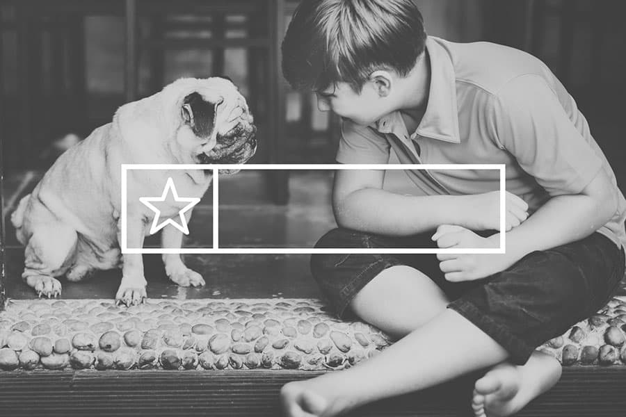 6 Local SEO Trends for Pet Sitters and Dog Walkers